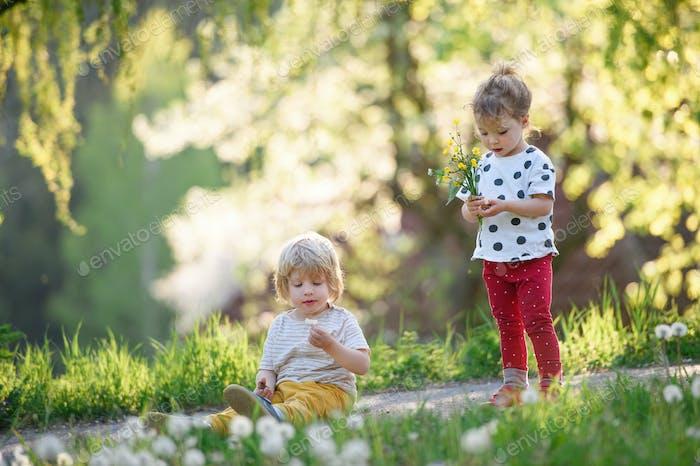 Kleine Kinder Jungen und Mädchen spielen im Freien im Frühling Natur