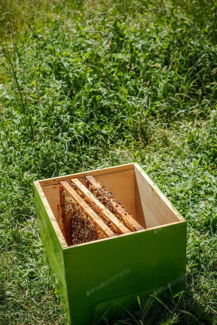 Holzbienenkorb