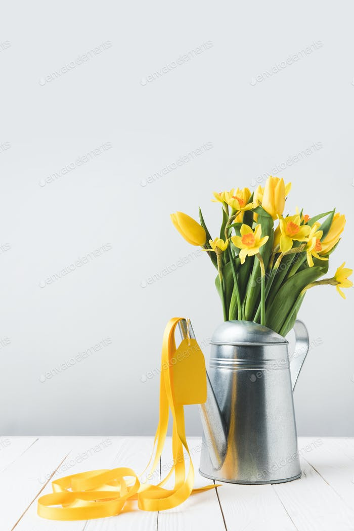 schöne gelbe Frühlingsblumen in Gießkanne auf grau