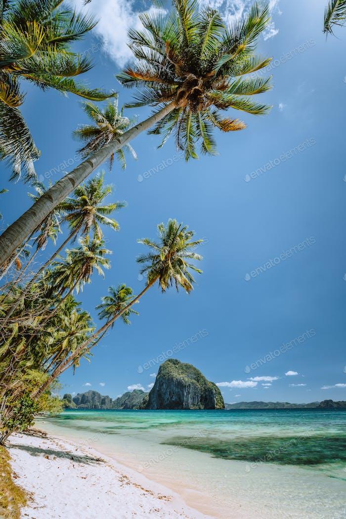 Palm trees in wind breeze. Sandy beach with beautiful tropical island in background. Dreamlike