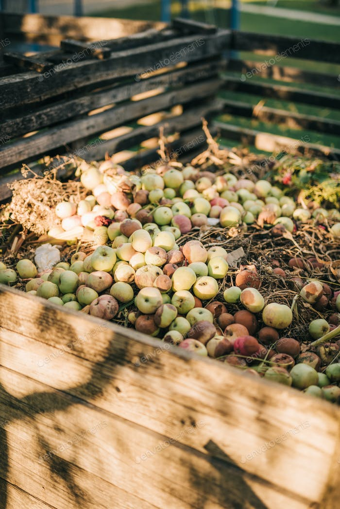 Apples on a compost heap