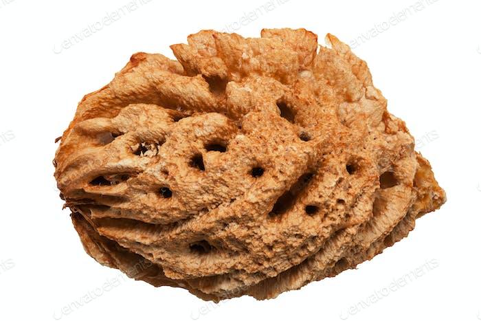 Pfirsich-Nussschale