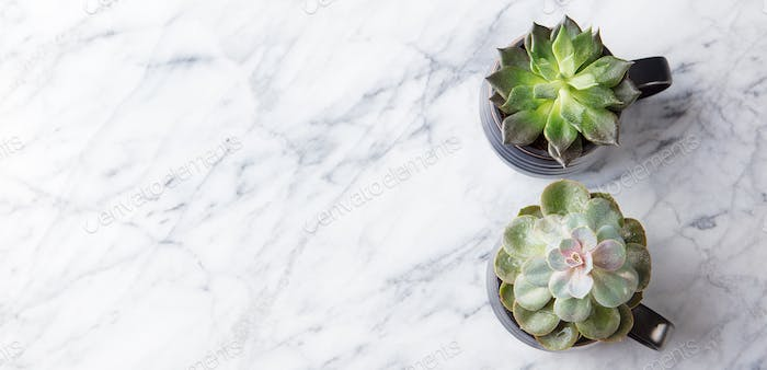 Succulent Home Plants on Marble Background. Top View.