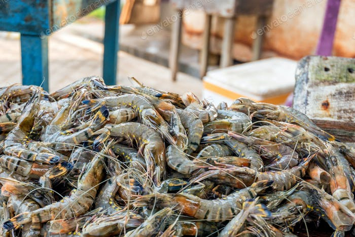 Tiger prawns at Asian fishmarket