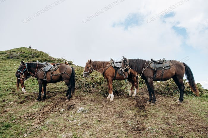 Horses are waiting for the owner in the mountains