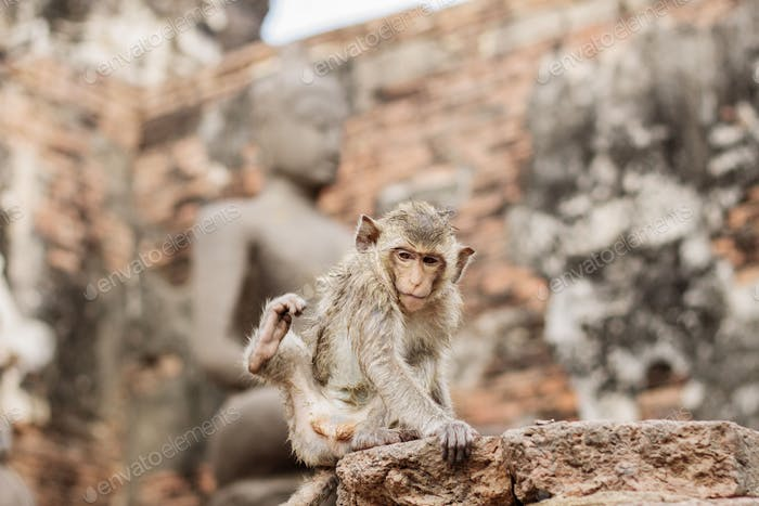 Baby monkey on brick