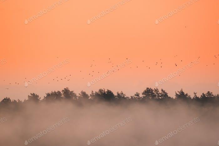 Herde Zugvögel Fliegen im Herbst oder Frühling Sonnenaufgang Schrei