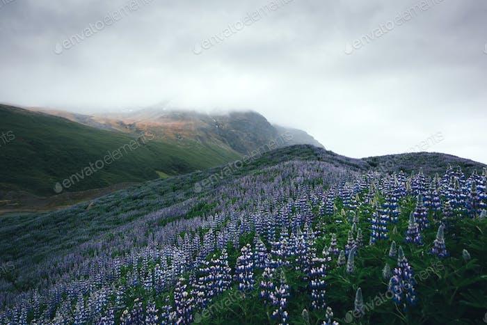 Horizontal típico de Islandia