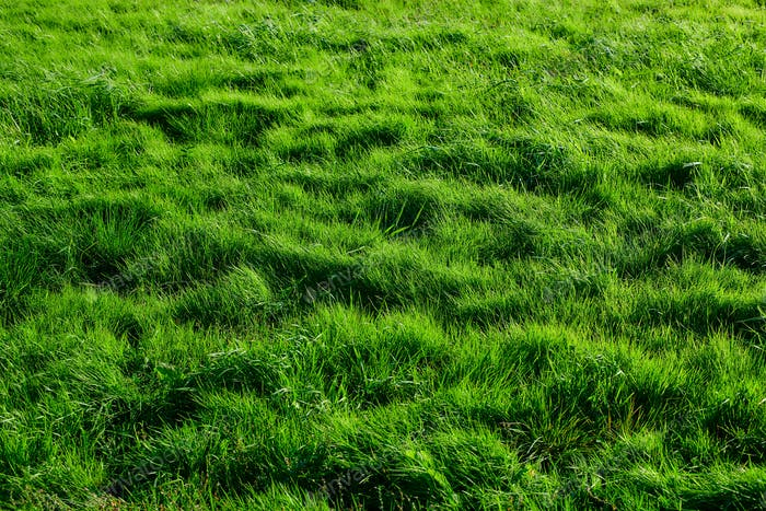 Green grass background meadow