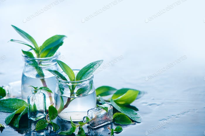 Green plants in glass jars header. Clarity and freshness concept with leaves and water. Light