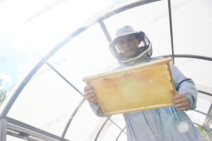 Modern Apiarist Collecting Honey