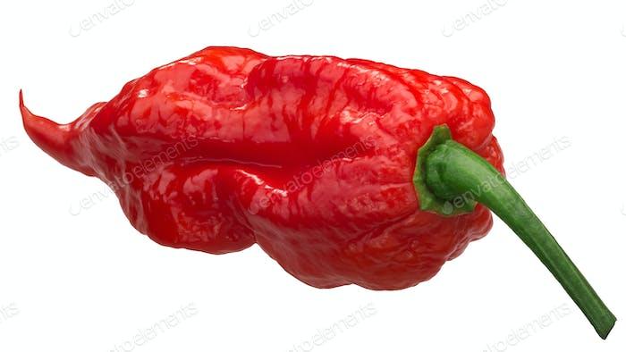 Bhut Jolokia ghost pepper c. chinense, paths