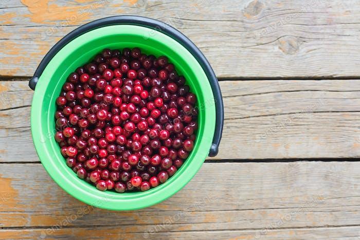 harvest of cherry