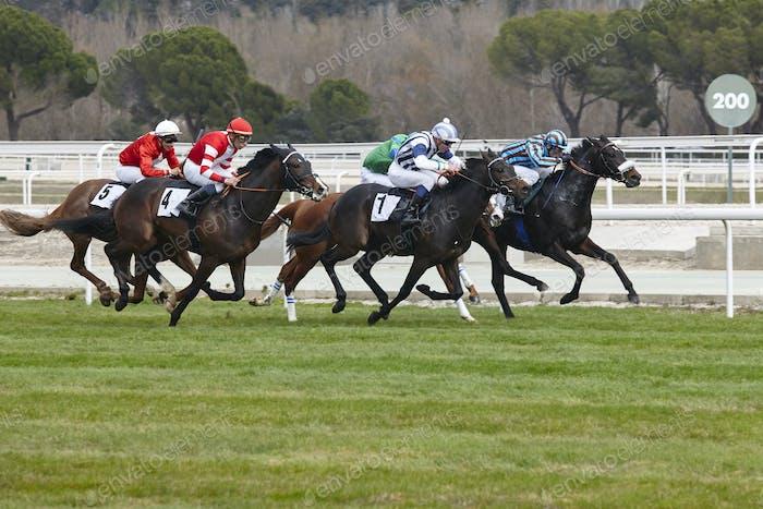 Pferderennen letzten Ansturm. Wettkampfsport. Hippodrom. Sieger. Geschwindigkeitshintergrund