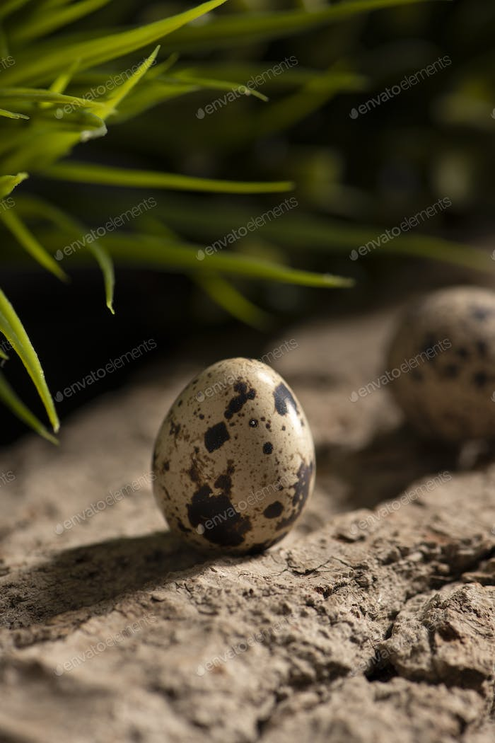 Fresh quail eggs in the forest on a wooden surface