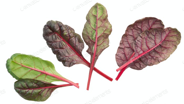 Chard mangold beta vulgaris leaves, top, paths