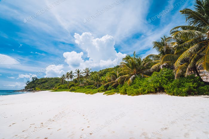 Tropical secluded sandy beach with coconut palm trees. Blue sky with white clouds above