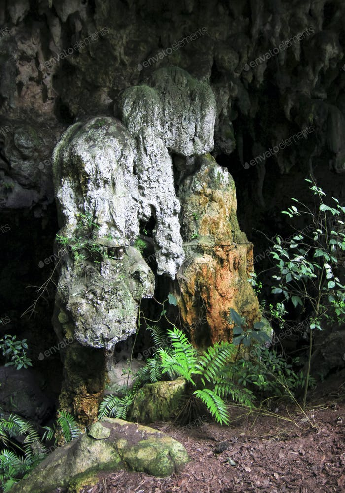 Cave Formations and Rare Cycad Plants in Belize