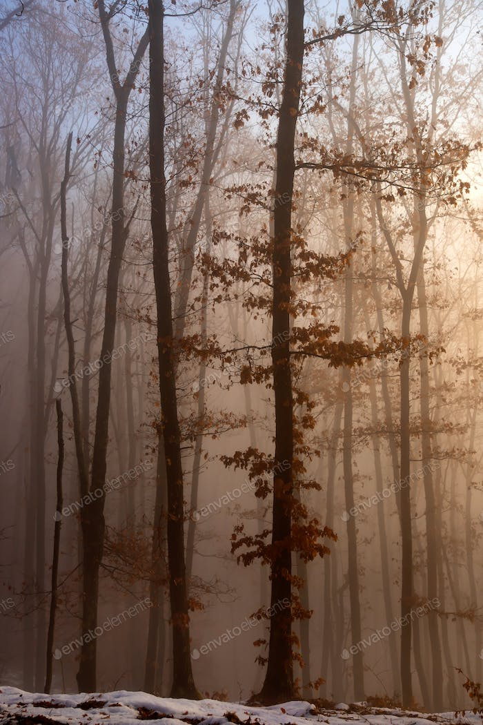 Mist in the woods