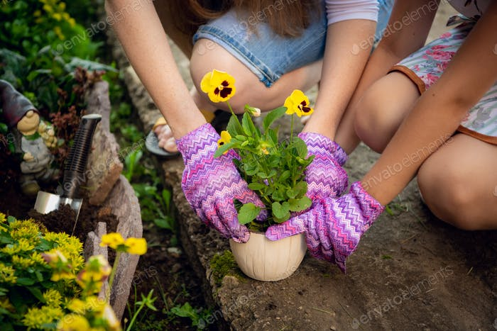 Two people - mother and daughter - are planting flower to the pot to decorate the garden