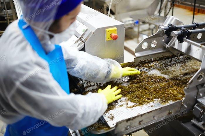 Preparation of seaweed