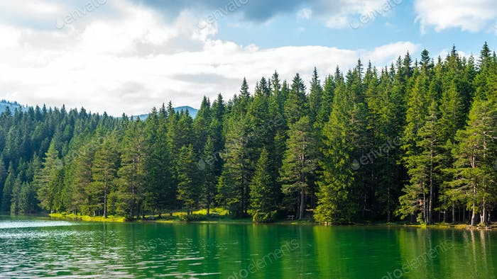 green forest and beautiful glacial Black Lake in Montenegro