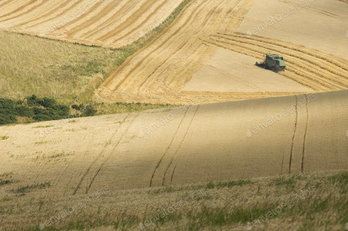Combine Harvester in Golden Fields
