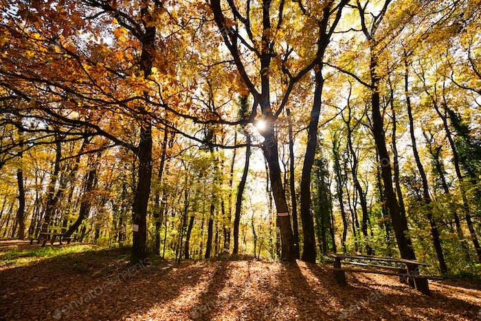 Wunderschöne Waldlandschaft