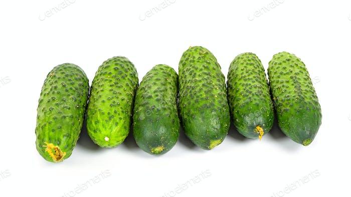 Fresh cucumbers laying in a row