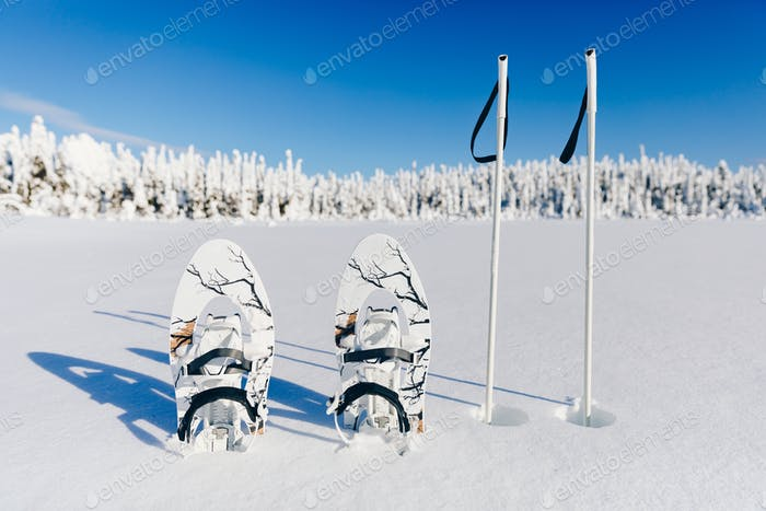 White snowshoes with trekking poles in the snow on the winter forest and snowy background.