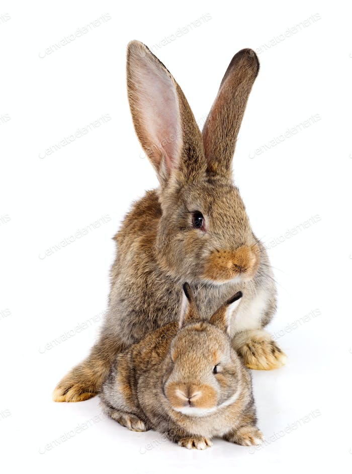 Mother rabbit with newborn bunny