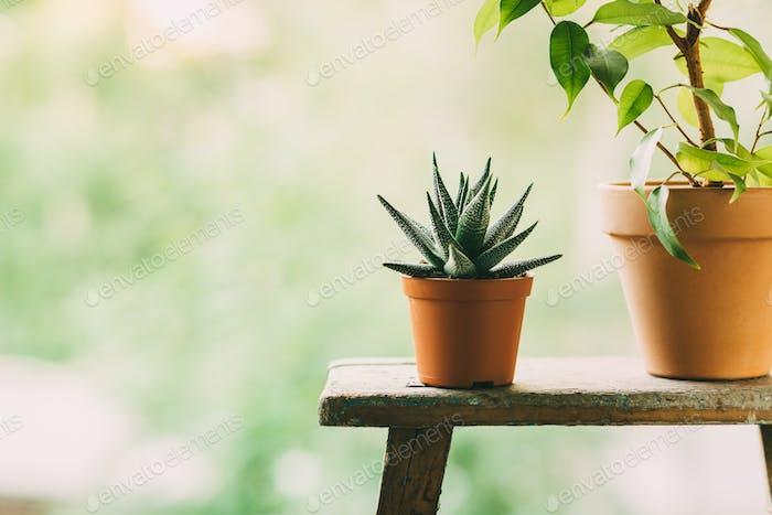Heimpflanzen in Töpfen im Freien