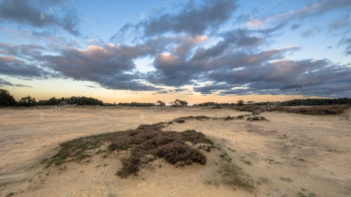 Sunset over sand dunes Hoge Veluwe