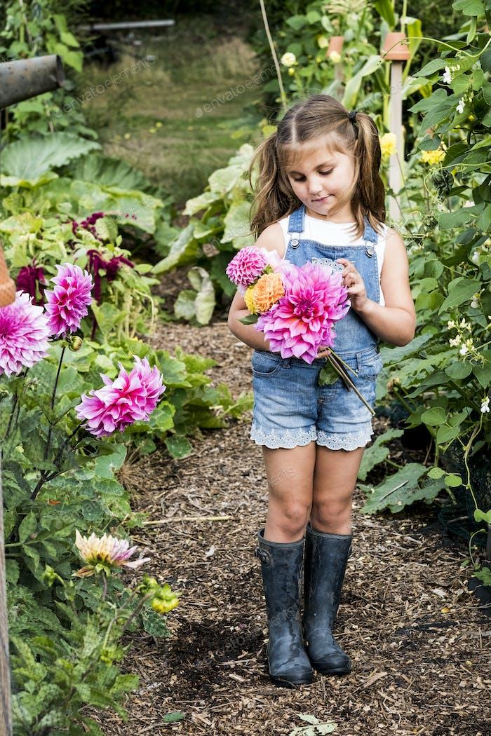 Girl wearing denim dungarees standing in a garden, holding pink Dahlias.