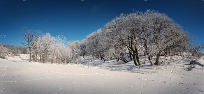 Снежный лес на фоне голубого неба