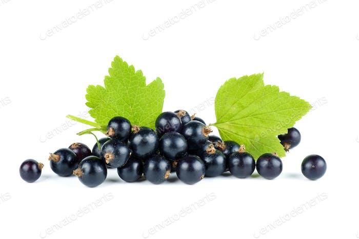 Kleiner Haufen frischer schwarzer Johannisbeere Beeren