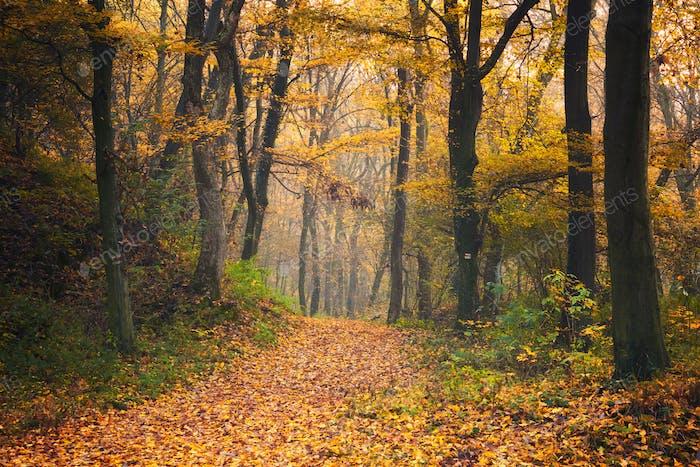 Herbst-Waldstraße Szene