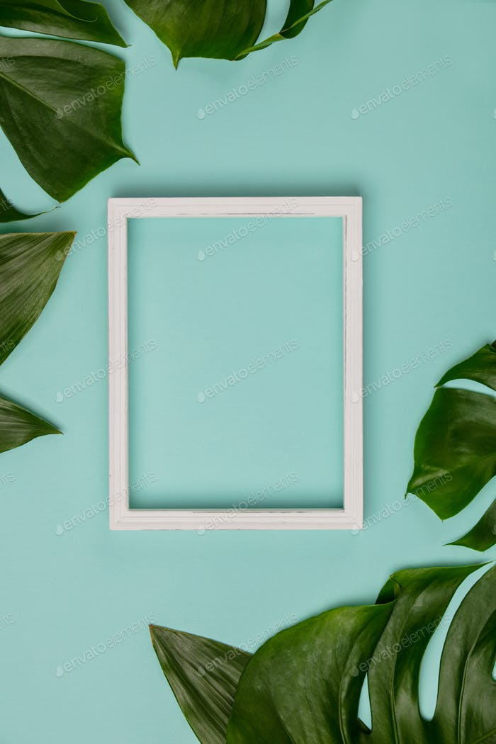 Img 1902-498tropical plant and white frame2