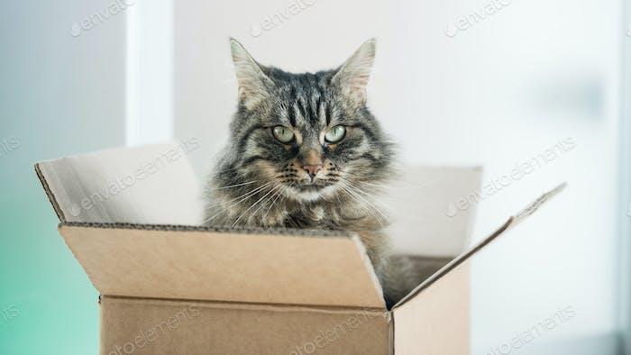 Schöne Katze in einer Pappschachtel