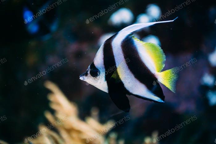 Colorful sea fish in aquarium