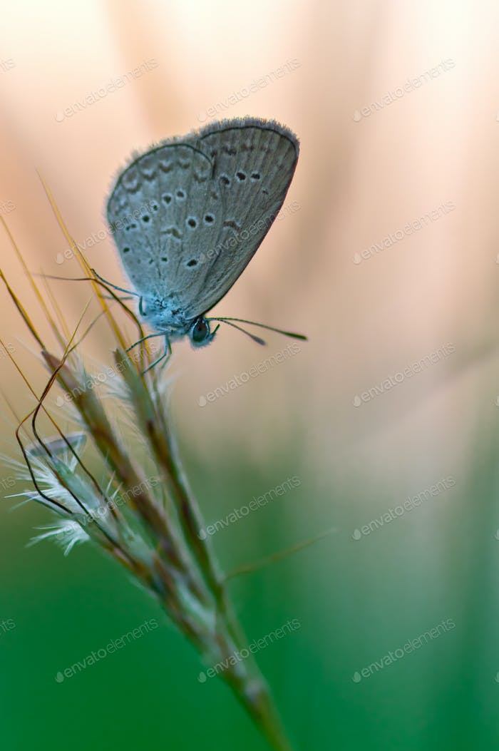 Gray butterfly perching on flower