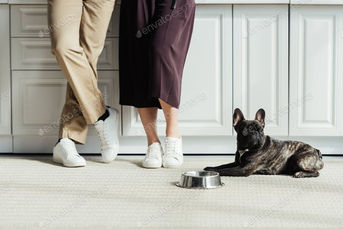 French bulldog puppy sitting on floor by owners