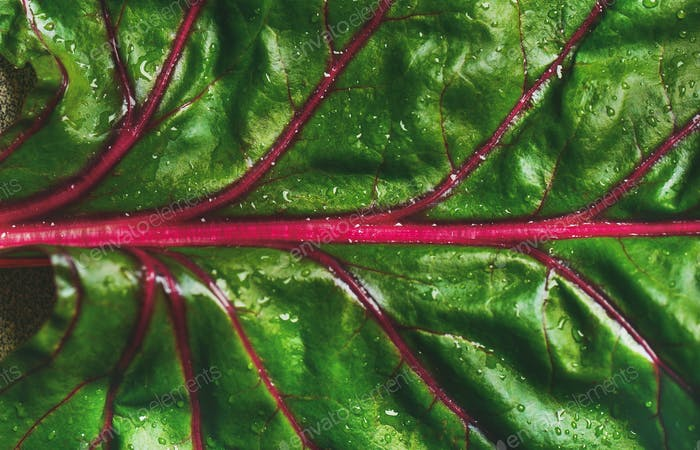 Flat-lay of fresh green leaves of swiss chard. Alkaline diet