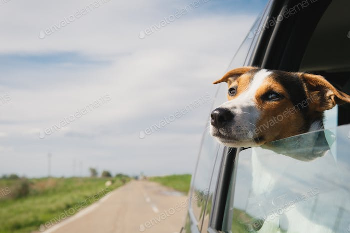 Thumbnail for the dog rides in the car