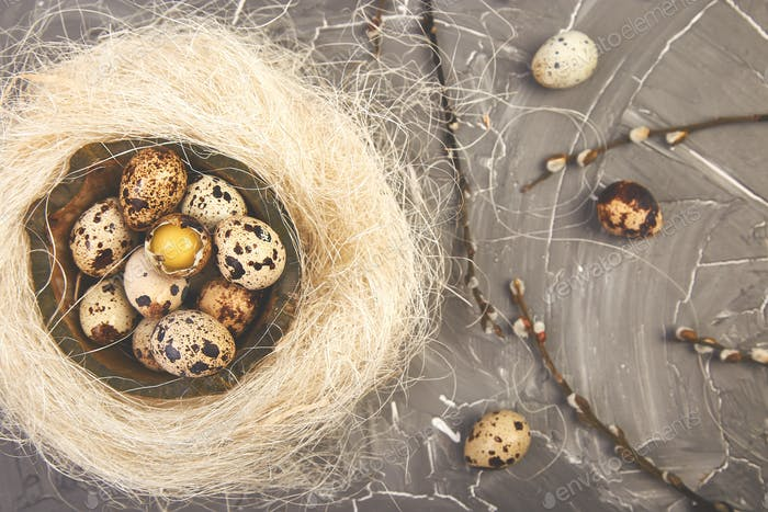 Quail  Easter eggs in the nest on grey background with willow branch.