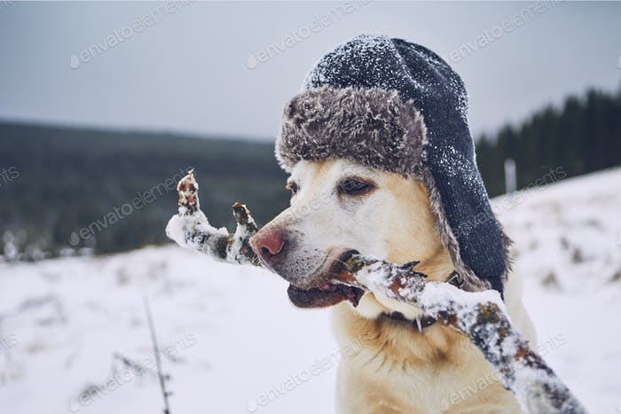 Funny portrait of dog with cap