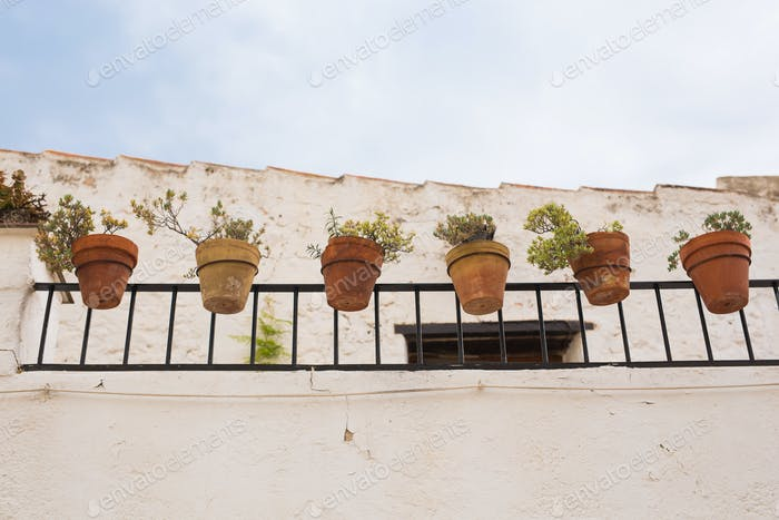 Green potted plants in beautiful pot outdoor