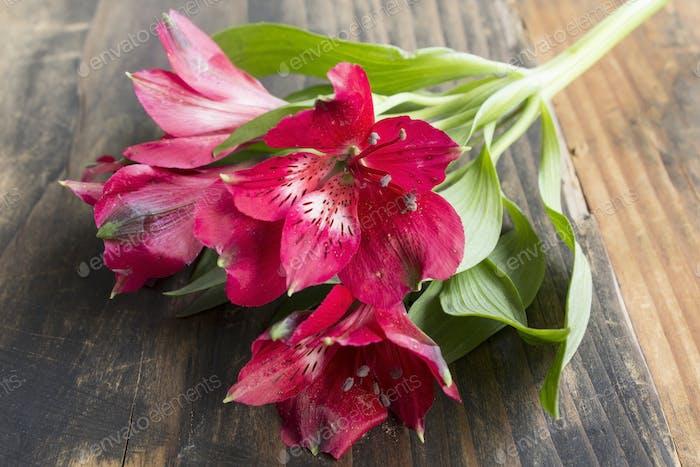 Red Alstroemeria Flower