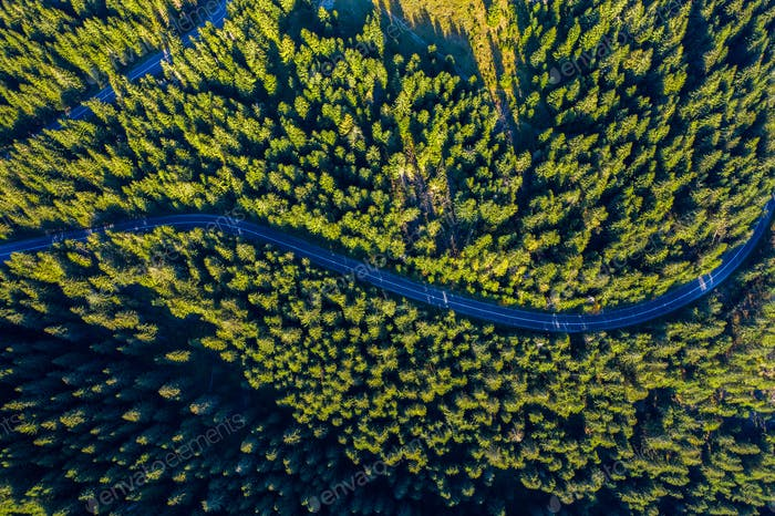Aerial view of green pine forest and a country serpentine road captured from a drone above