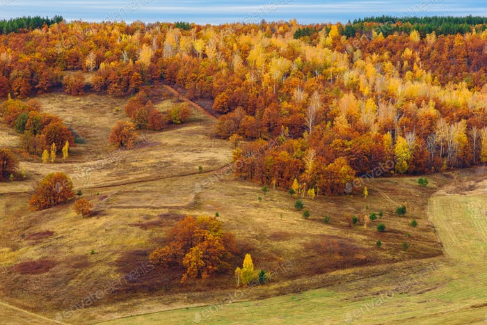 Autumnal forest at overcast day